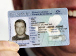 Drivers License (Large)